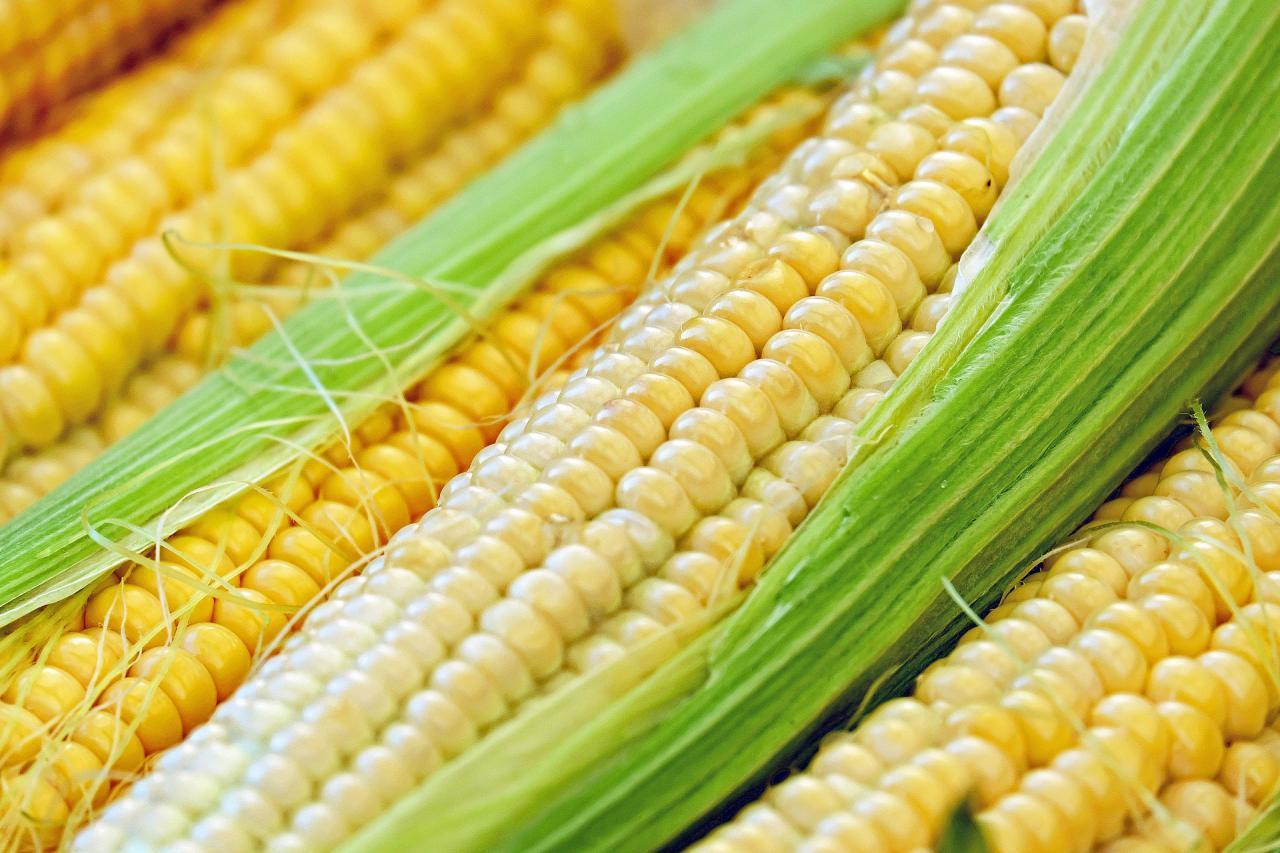 В портах Украины после продолжительного снижения наблюдается активный рост цен на кукурузу