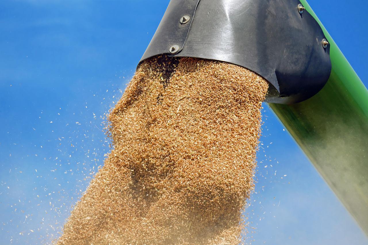 Експорт пшениці з Причорноморського регіону зросте на 4%