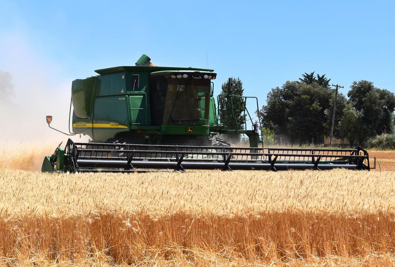 В Украине приступили к сбору ранних зерновых культур