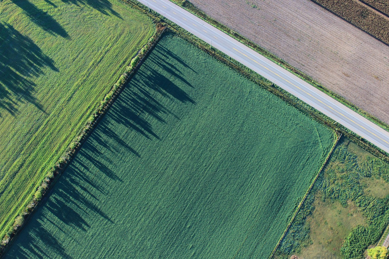 Иностранцам станет доступна покупка земли в Украине, при соблюдении определенных условий