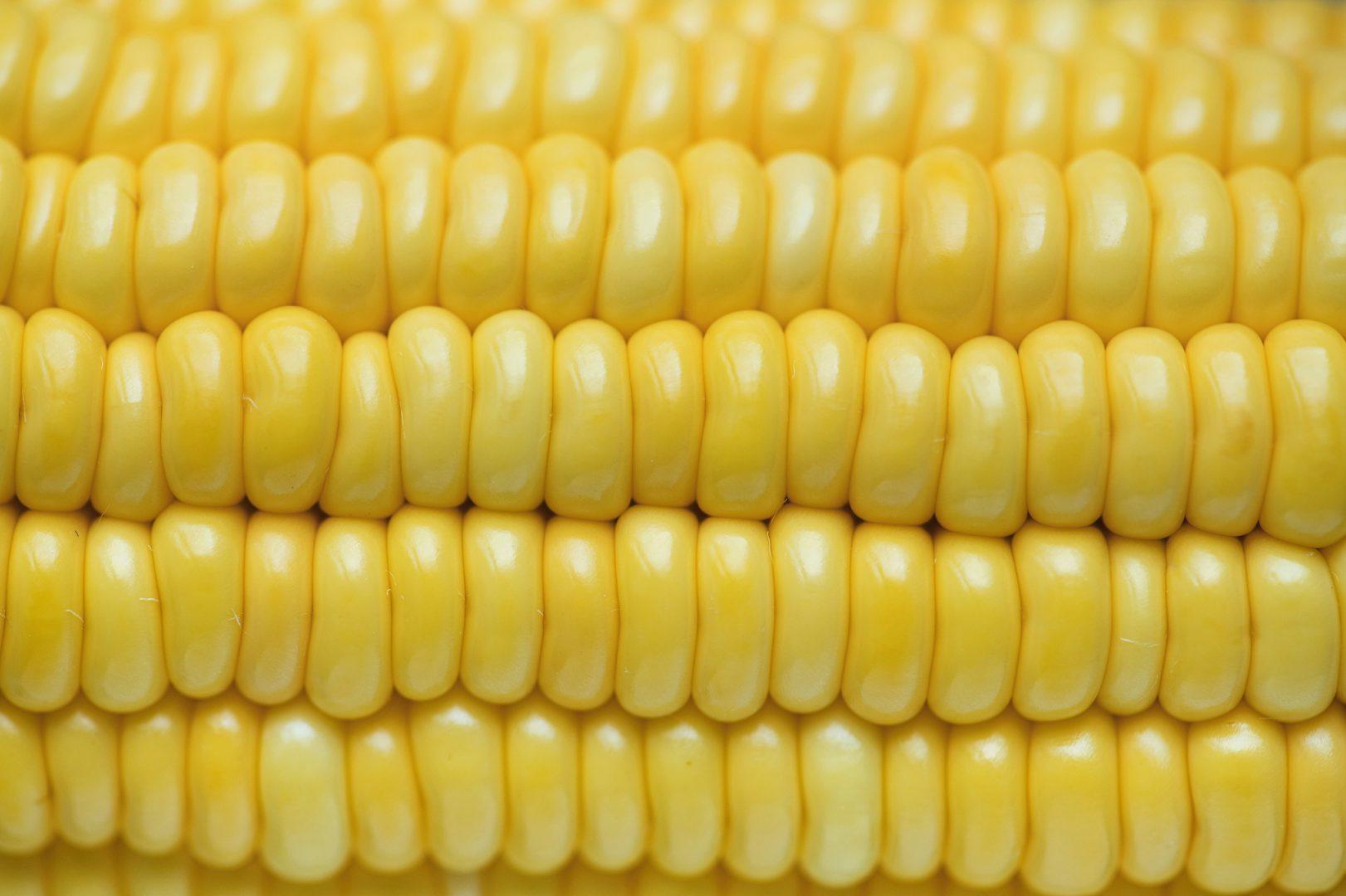 Крупную партию кукурузы могут отправить из Украины в Индию