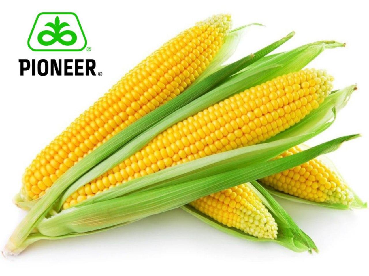 Новий світовий рекорд по врожайності був встановлений гібридом кукурудзи Pioneer