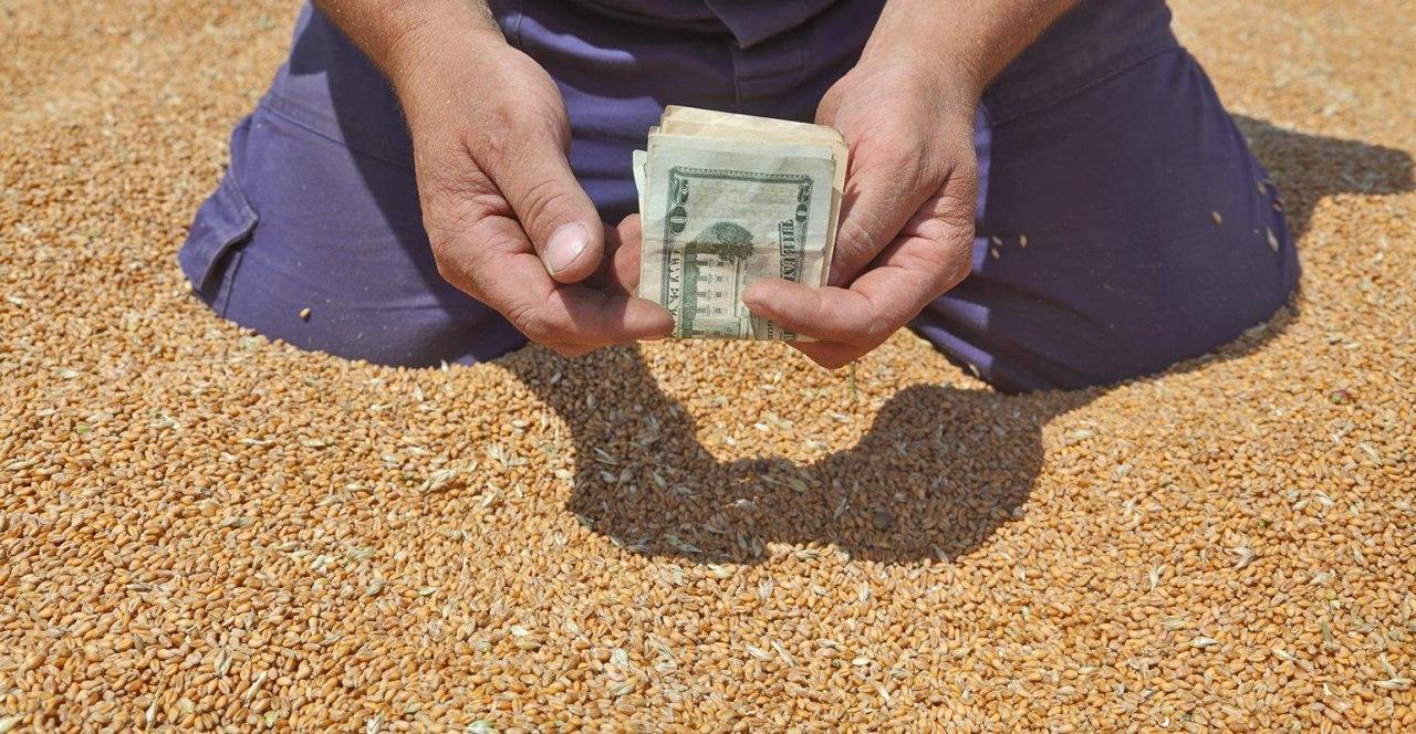 Из-за обострения ситуации на Ближнем Востоке аграриям рекомендуют временно воздержаться от продажи зерновых