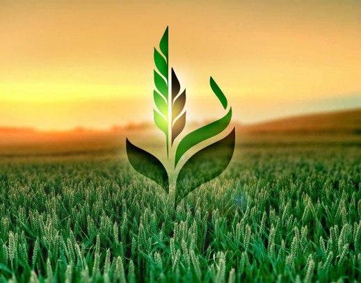 Предприятие «Аграрный фонд» займется реализацией зерна через биржу