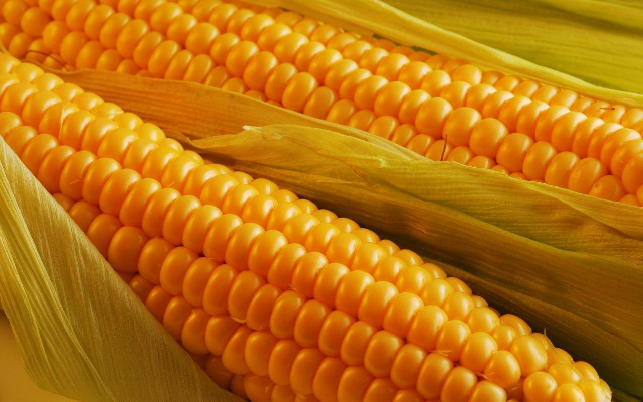 Цена на кукурузу в Украине возросла