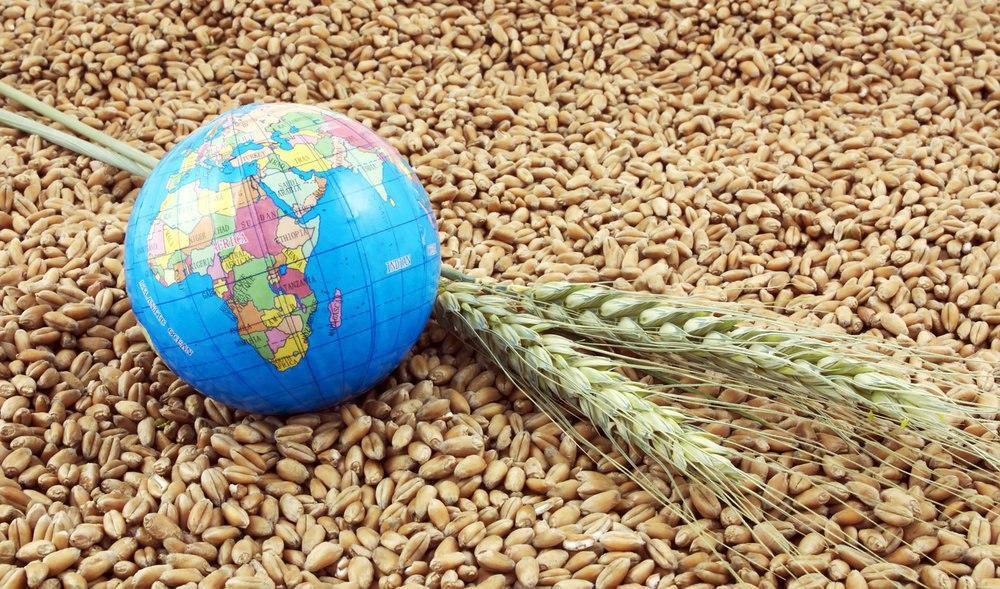 ТОП-10 країн-імпортерів українського зерна